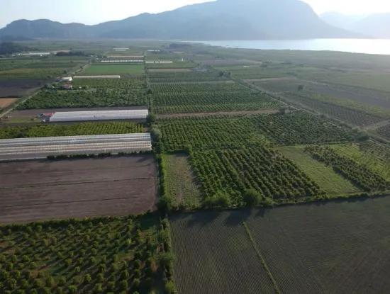 Oriya Eskiköy Zum Verkauf Granatapfel Garten, 10 000 M2