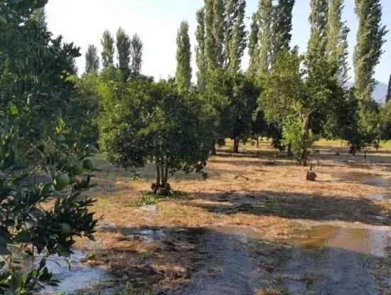 Garten Zum Verkauf In Köyceğiz Dorf