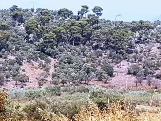 73 000 M2 Plot With Sea Views For Sale In Dalaman