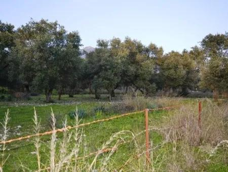 He Completed Education Lake View Land For Sale In Koycegiz