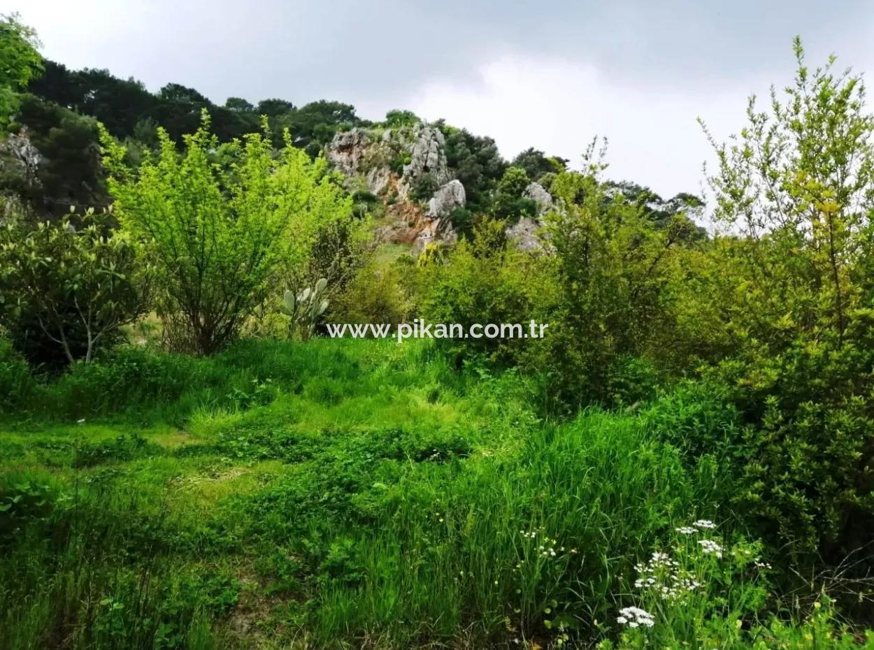 Güzelyurt Ta Satılık Bakımlı Nar Bahçesi