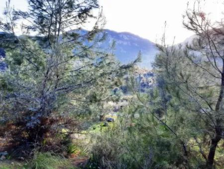 Muğla Dalyan Gökbelde 1700 M2 Doğa Manzaralı Müstakil Arazi Ve Bungalov