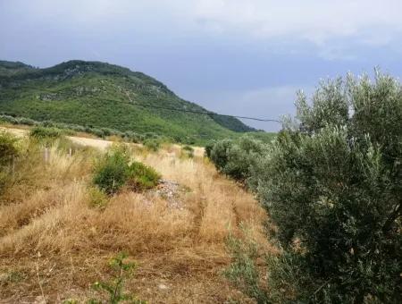 Köyceğiz Zeytinalanında Satılık Göl Manzaralı Tarla