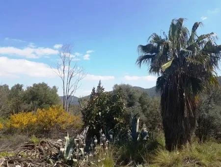 Sarıgerme De Satılık Kelepir Arsa, 2616 M2, 6 Müstakil Parsel