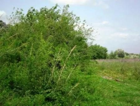 Ortaca Fevziye De Satılık Kelepir Arazi, Yatırıma Uygun, 1500 M2