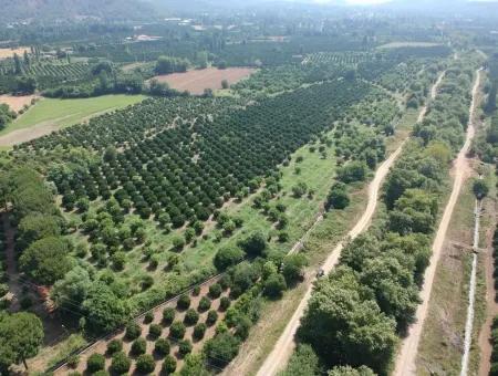 Beyobası Nda Satılık Portakal Bahçesi