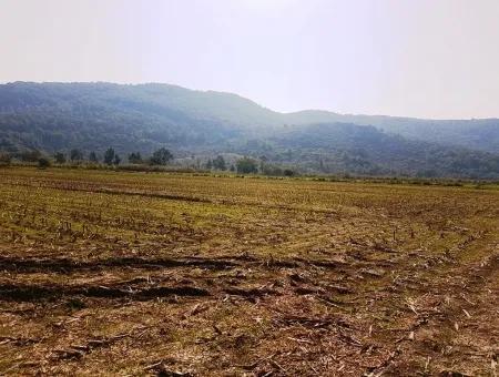 Güzelyurtta Kiralık Verimli Arazi