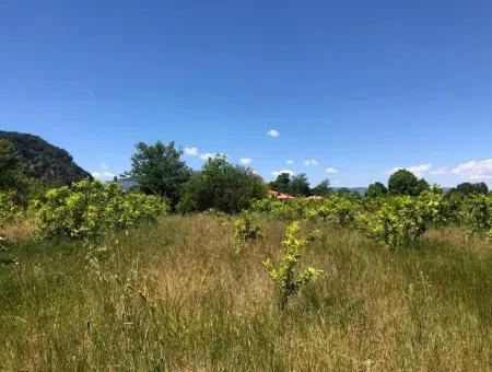 Ortaca Okçular Da Satılık 6.000 M2 Arazi