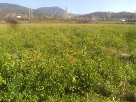 Zeytinalanında Satılık Kelepir Müstakil Arazi
