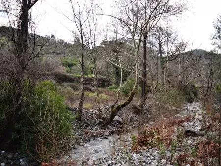 Köyceğiz Sazakta Kelepir 2 300 M2 Verimli Arazi Satılık